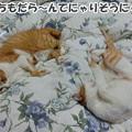 Photos: 似た者親子