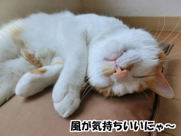 Photos: お昼寝日和