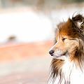 Photos: 愛犬 EOS7D EF85 F1.8USM