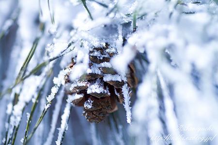 雪の中の松ぼっくり SP AF90 (272E)