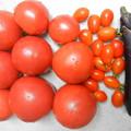 家庭菜園 トマト なすび