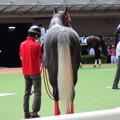Photos: レアヴェントゥーレ 毛筆の様な尻尾