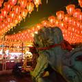 提灯列と狛犬 Lanterns & Lion-dogs