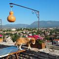 写真: 犬も歩けば花に触れるサフランボルの丘 Beautiful views at Hıdırlık Tepesi