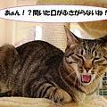 Photos: 開いた口が・・・サンク