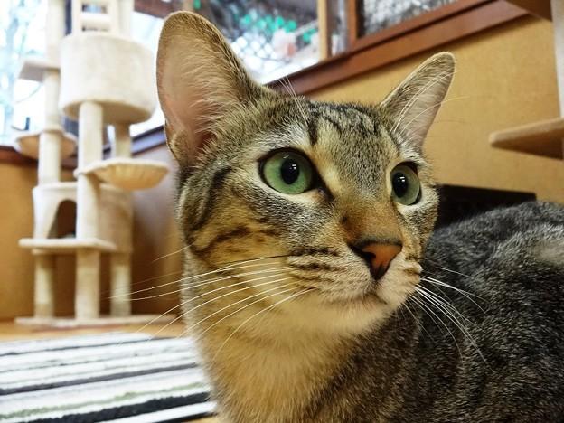 Photos: マサキ「よし!おいら頑張る!!」