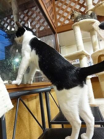 つぐみ「窓の外、異常なし!」