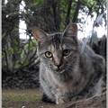 写真: 猫目線