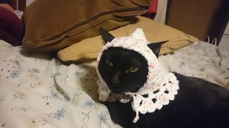 童話のおばあさん猫