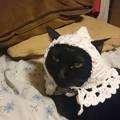 写真: 童話のおばあさん猫