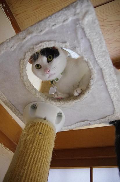 写真: 上からこんにちは