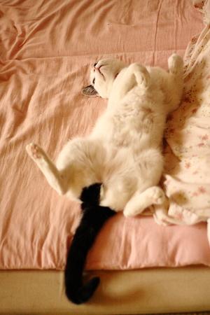 猫の開き2