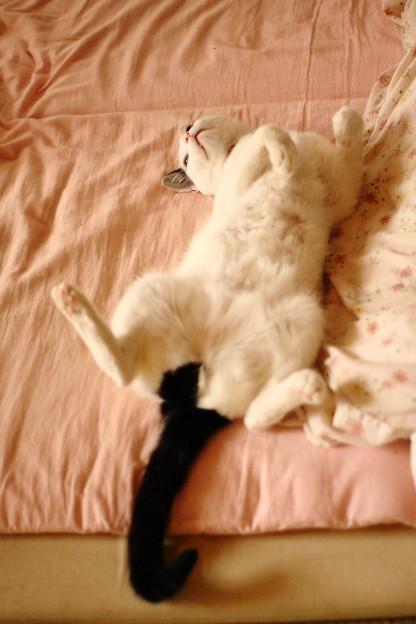 写真: 猫の開き2