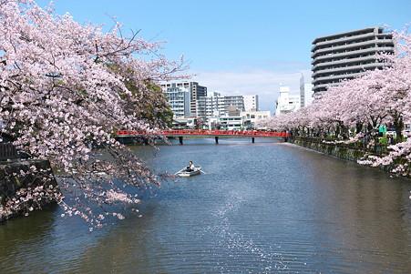 2012.04.12 小田原城 サクラ流れ