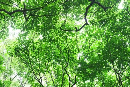2015.06.08 瀬谷市民の森 もりそら