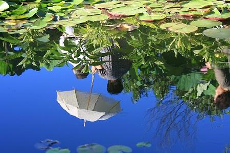 2011.07.17 大船植物園 蓮 日傘