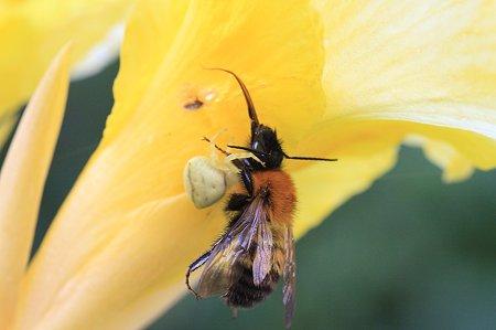 2011.08.30 和泉川 カンナ 花陰の生と死 アズチグモとハチ