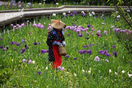 花摘み・・横須賀しょうぶ園 16
