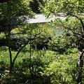 Photos: 東慶寺~水無月-259