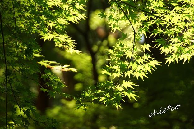 東慶寺~水無月-321