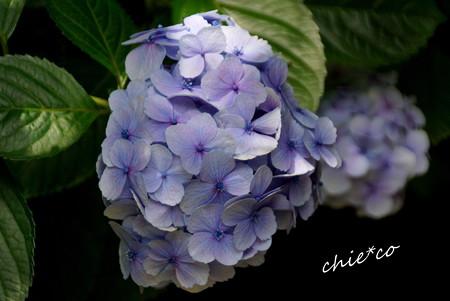 鎌倉-395