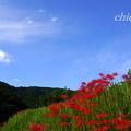 Photos: 日向薬師-328