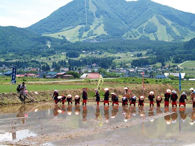 御田植え祭り 2