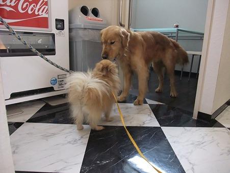 どんな犬にも優しく接し