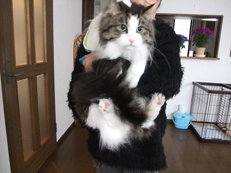 先住猫ちゃんと