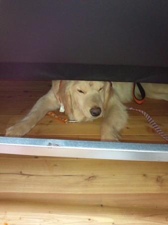 怖がってベッドの下に・・・