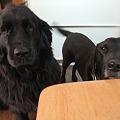 Photos: シニアの黒犬さん達