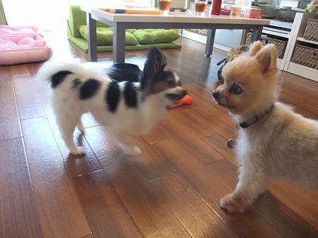 お、ハナちゃんと遊んでる!