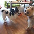 Photos: お、ハナちゃんと遊んでる!