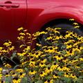 写真: 黄色い花と赤20150919