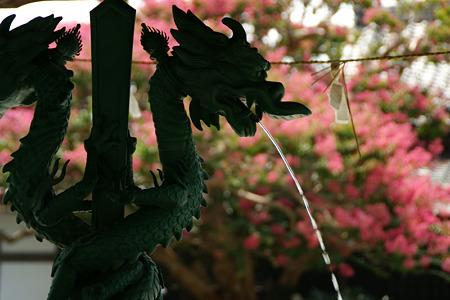 龍の手水鉢とサルスベリ!(110813)