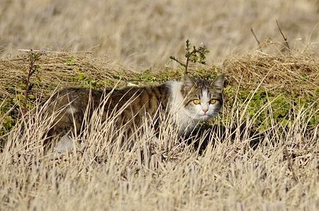 猛禽フィールドの猫ちゃん