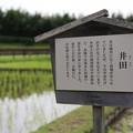 Photos: 井田
