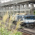 Photos: 秋の貨物駅にEF64 1011