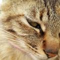 Photos: なかよしになった猫