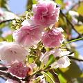 [Spring] 2011 桜
