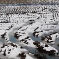 雪の残る水田