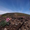 コマクサと硫黄岳