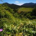 ハクサンフウロと池の平湿原