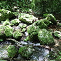 150629-63海沢園地へ滝を求めて・フレネノ滝へはここを渡るの?