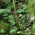 150629-64海沢園地へ滝を求めて・フレネノ滝へはここを渡るの?・対岸にはピンクのテープがあるが