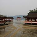 Photos: 110516-49厳島神社と大鳥居