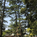 Photos: 110519-82出雲大社の森