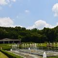 Photos: 夏の公園?