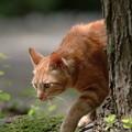 木の陰から猫ちゃん
