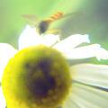 写真: 花とハチ2